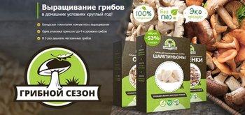 Как я заработала 50 тыс руб на продаже грибов, выращенных в квартире?